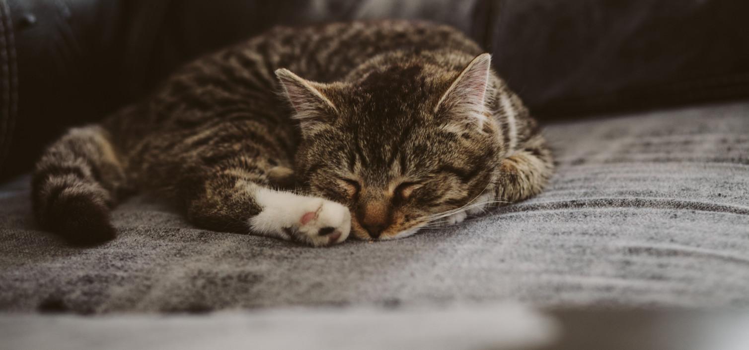 Wymioty, problemy pokarmowe u kota