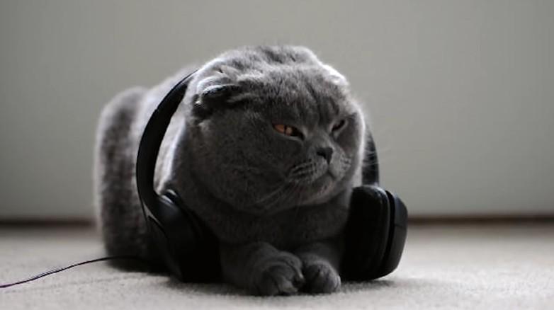 Muzyka dla kotów