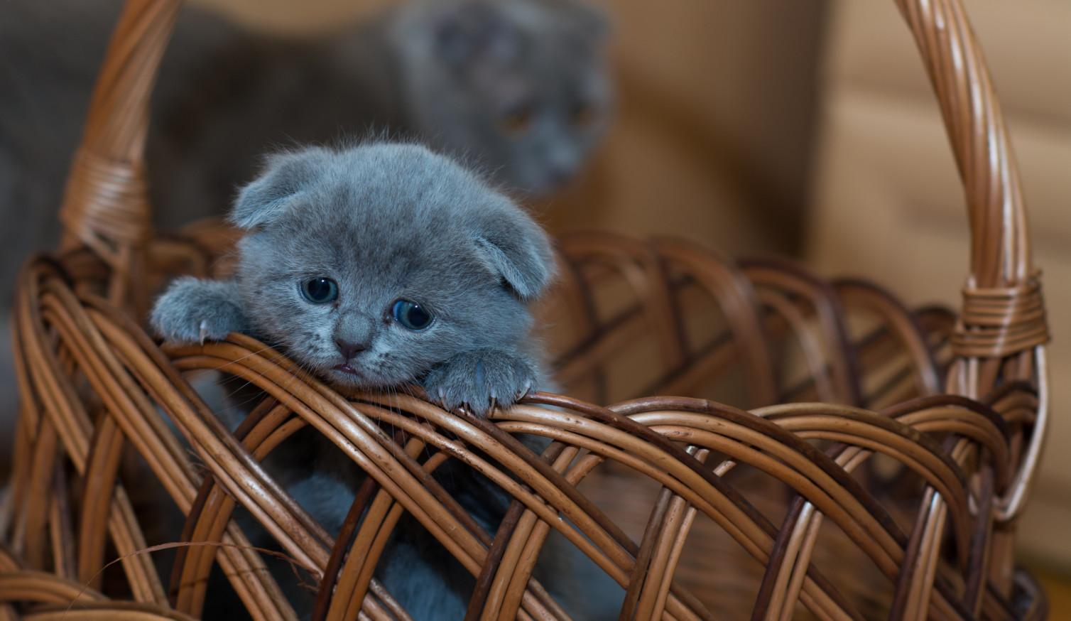 Zakup kota – praktyczne porady