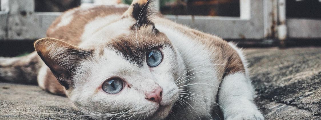 Połknięcie igły z nitką przez kotkę