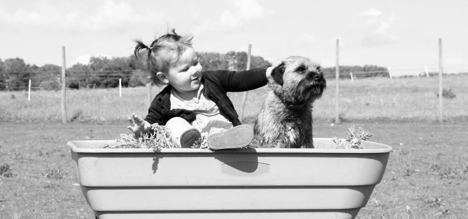 Zakup psa a małe dzieci