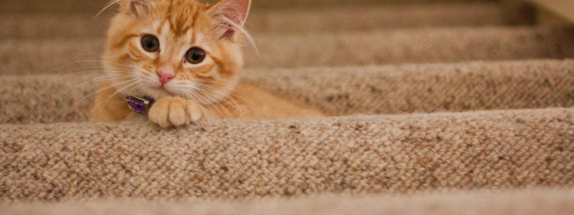 Złamanie żuchwy u kota