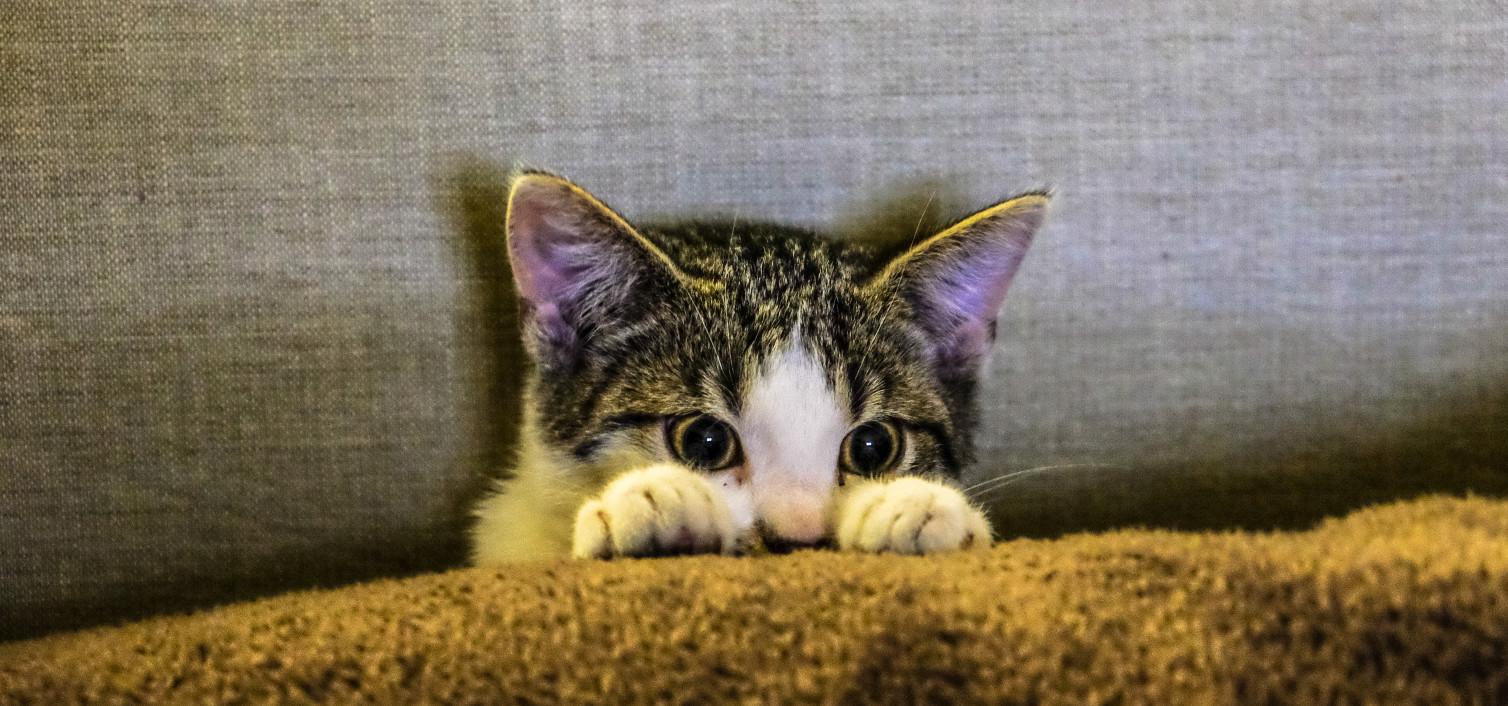 Złamanie kości szyjki udowej u kota