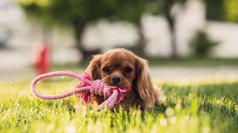 Pies w centrum handlowym