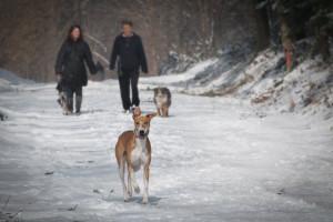 groźna zima dla  zwierząt