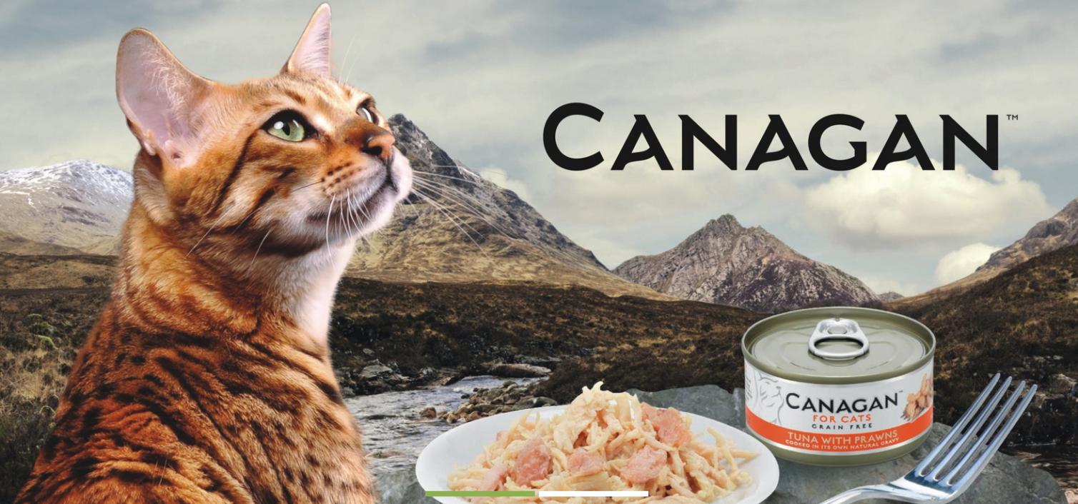 Zdrowe karmy dla kotów – karma Canagan