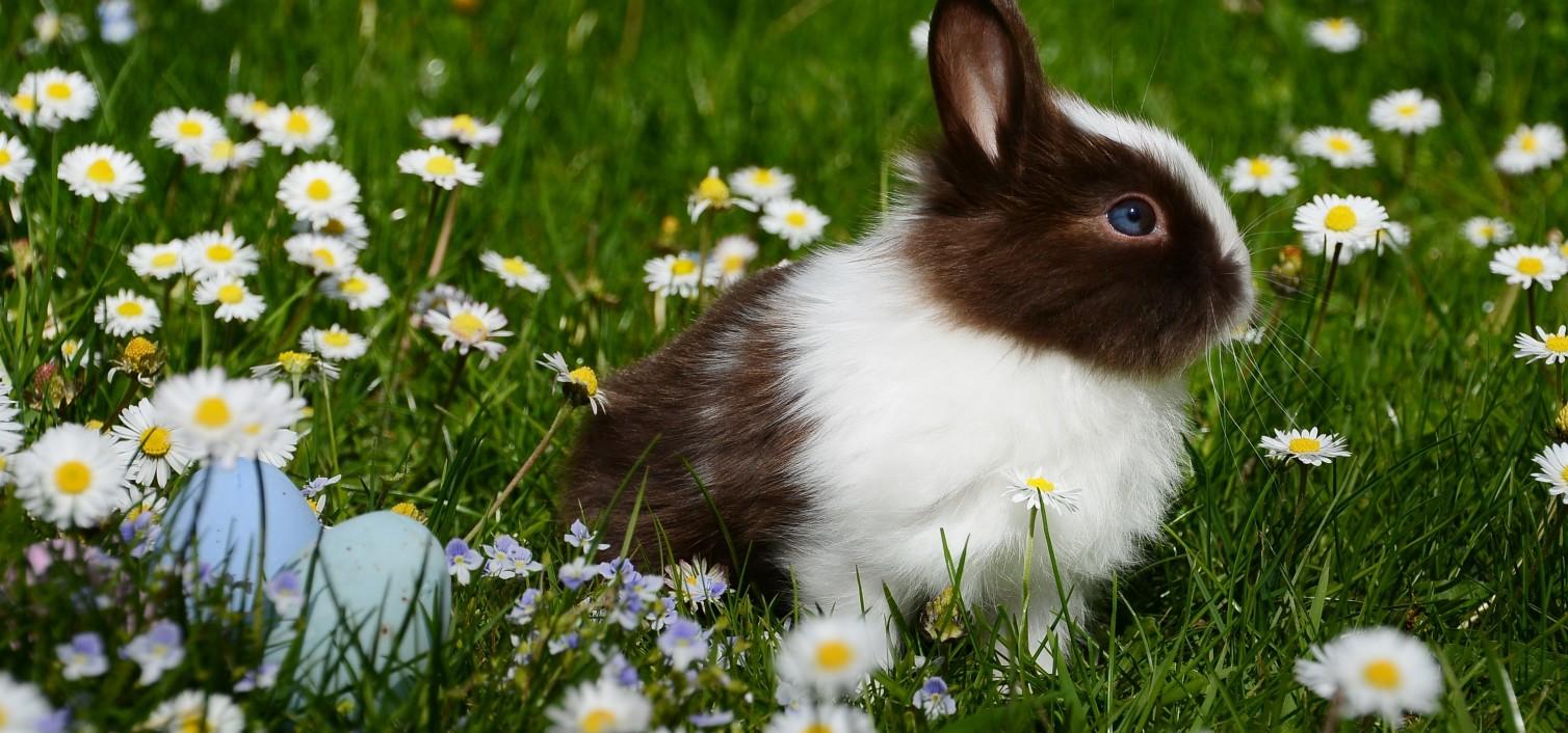 Żywienie i pielęgnacja królików – Stowarzyszenie Pomocy Królikom