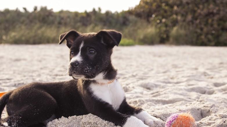 Jak pomóc psu w gorące dni?