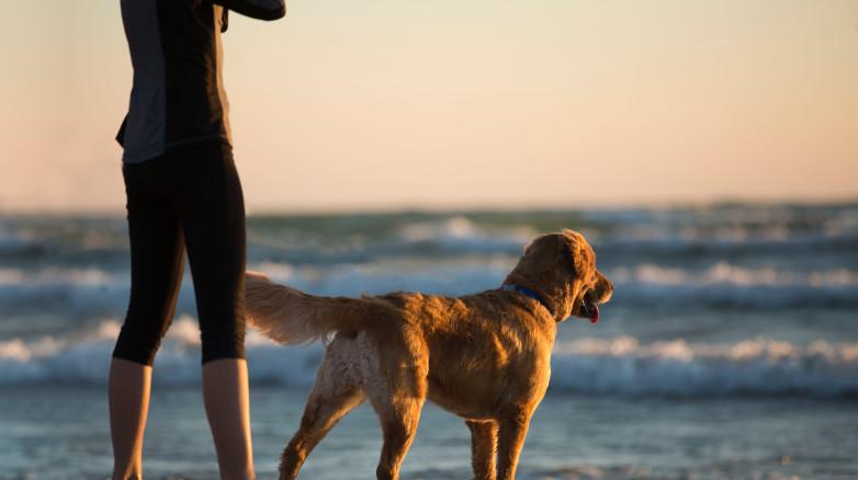 Ciekawy spacer z psem